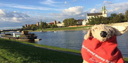 Pluszak jeździ po świecie i zachęca do adopcji zwierząt
