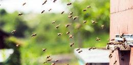 Pszczoły pójdą na wojnę!
