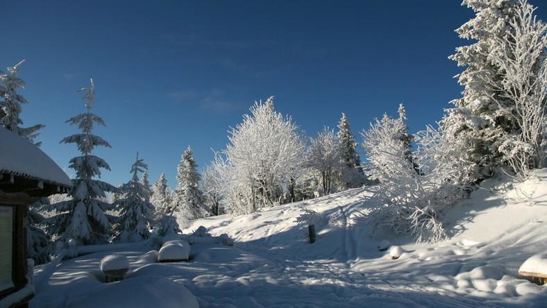Śnieg nie przeszkadza w spacerach beskidzkimi szlakami