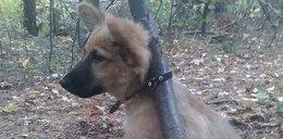 Porzucił tego szczeniaczka w lesie