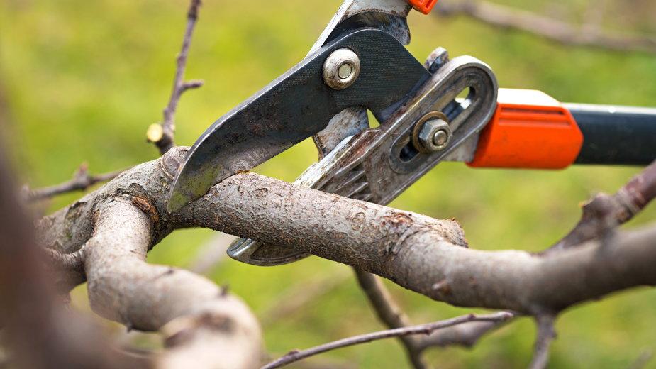 Drzewa owocowe przycinamy jesienią - ueuaphoto/stock.adobe.com