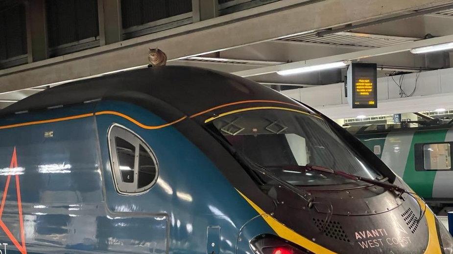 Sprawca zamieszania pozostawał nieporuszony (Fot. Twitter/London Euston)