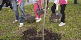 Mają za dużo dzieci. Muszą sadzić drzewa