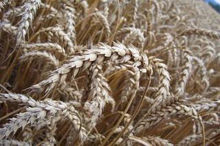 Komuniści obawiali się polskiej wsi. Debata o rolniczej 'Solidarności'