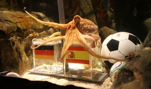 GERMANY - ANIMAL - FBL - WC2010 - GER - ESP - OCTOPUS - OFFBEAT