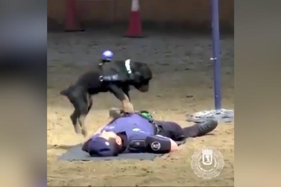 MALA ŠKOLA PRVE POMOĆI Neverovatno kako je dresiran ovaj policijski pas (VIDEO)