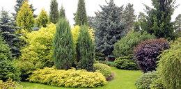 Te rośliny niszczą twoje zdrowie! Prawie każdy ma je w ogródku