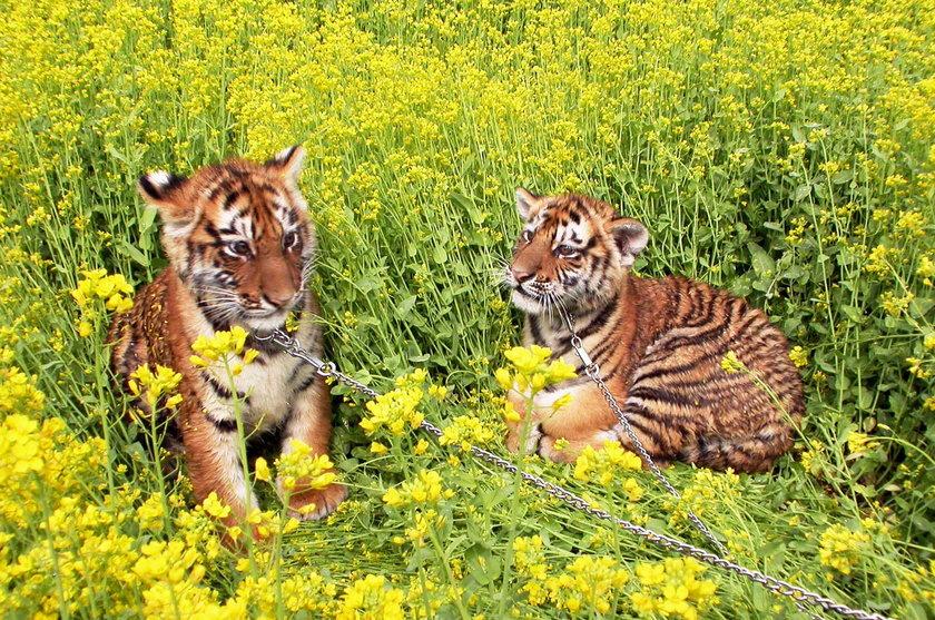 Zwierzęce bliźnięta
