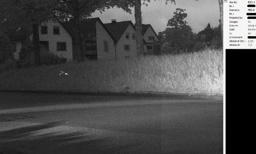 W Niemczech fotoradar złapał papugę, która przekroczyła prędkość
