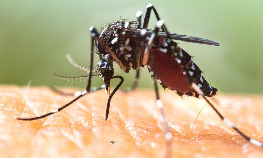 Komary tygrysie pojawiły się na zachodzie Niemiec.