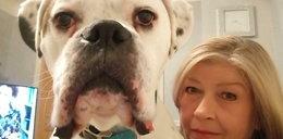 Ten pies to wandal. Narobił w domu szkód na 44 tys zł! ZDJĘCIA