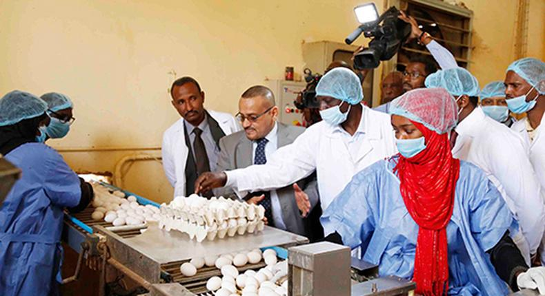 DP William Ruto visited a farm that rears 1.2 million chicken