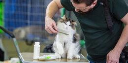 Najpiękniejsze koty zawładnęły poznańskimi targami!