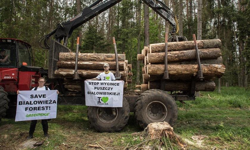 Trybunał Sprawiedliwości UE zakazał wycinki drzew w Puszczy Białowieskiej