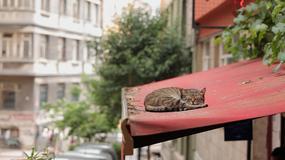 """""""Kedi - sekretne życie kotów"""" w kinach od 28 lipca"""