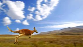 W austriackich Alpach znaleziono kangura
