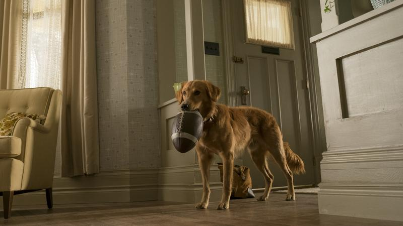 """""""Był sobie pies"""": kadr z filmu"""