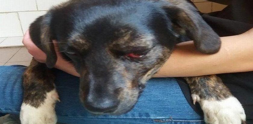 Chciał zabić psa kołkiem. Sąd nie miał litości