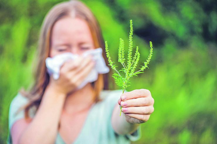 Polenska alergija liči na najobičniju kijavicu, ali ako se simptomi (zapušen nos, curenje nosa, rafalno kijanje) ponavljaju i uporni su, potrebno je da se obratite alergologu