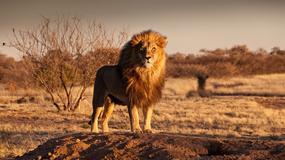 Dlaczego każdy miłośnik podróżowania powinien zobaczyć safari?