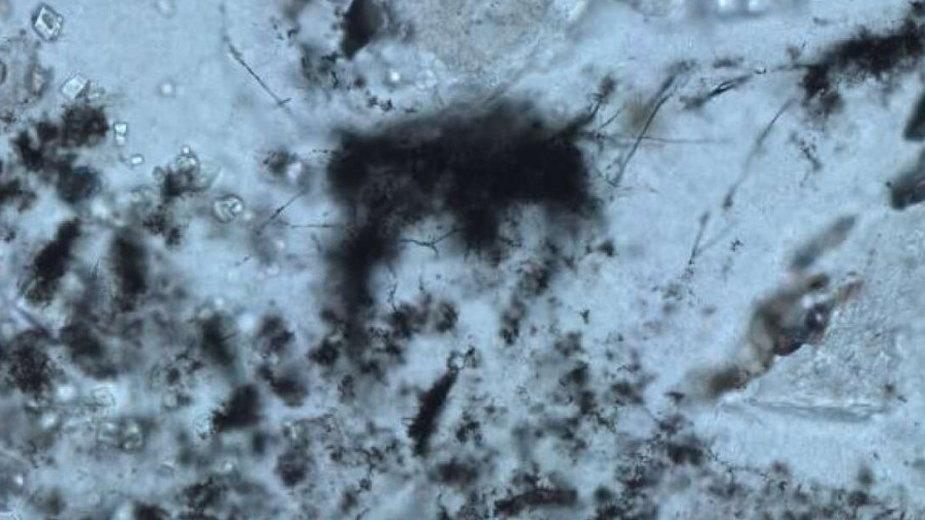 Mikroskamieniałości pierwotnych drobnoustrojów znalezione w skałach sprzed 3,4 miliarda lat