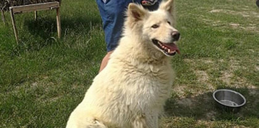 Uratowany z psiej mordowni wrócił do rodziny! Szukali go ponad pół roku