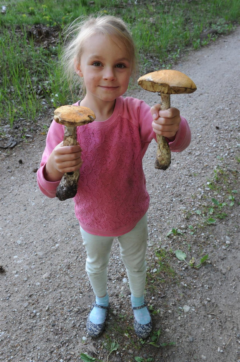 W lasach na Warmii i Mazurach na początku czerwca pojawiły się grzyby