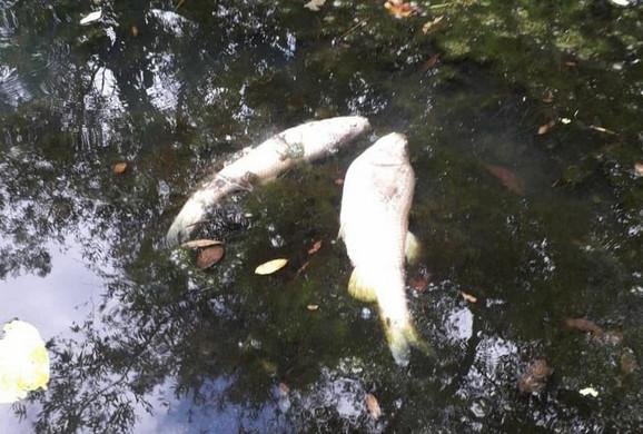Pomor riba u Jablanici kod Lebana