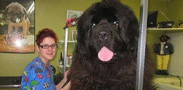 Oto największe psy!