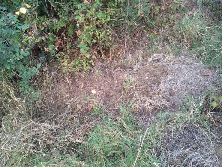 Radmila Paunovic iz Bublice pronasla grob u dvoristu koje se granici sa grobljem