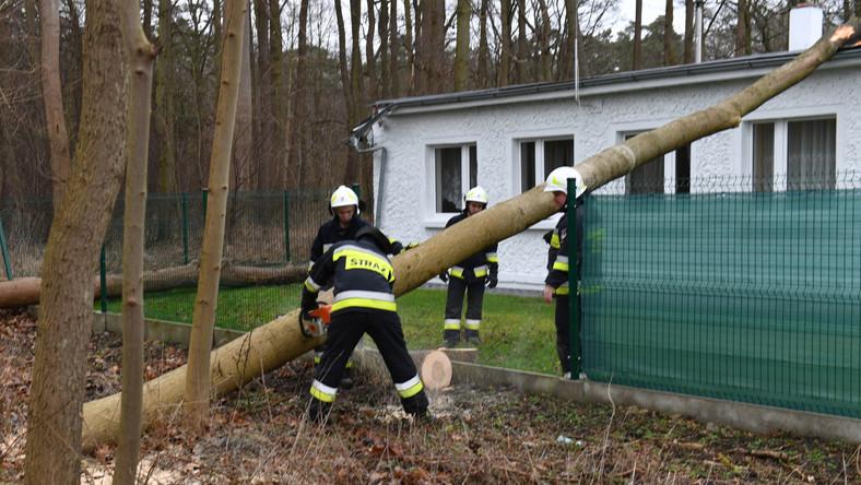Strażacy usuwają powalone drzewo