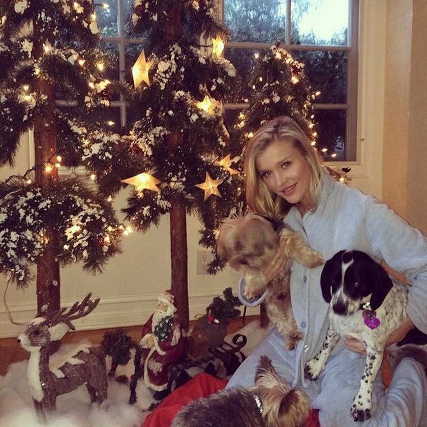 Joanna Krupa i jej psy w święta