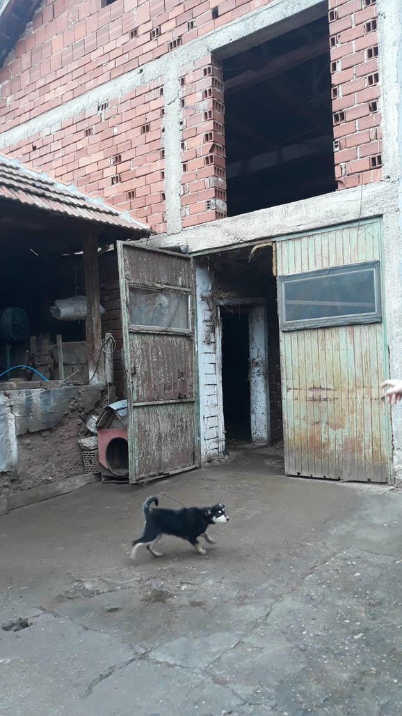 Jovanović prespavao u seniku ispred kog su dva psa