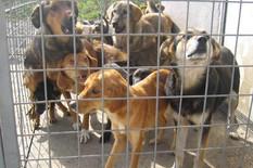 Banjaluka Azil za pse