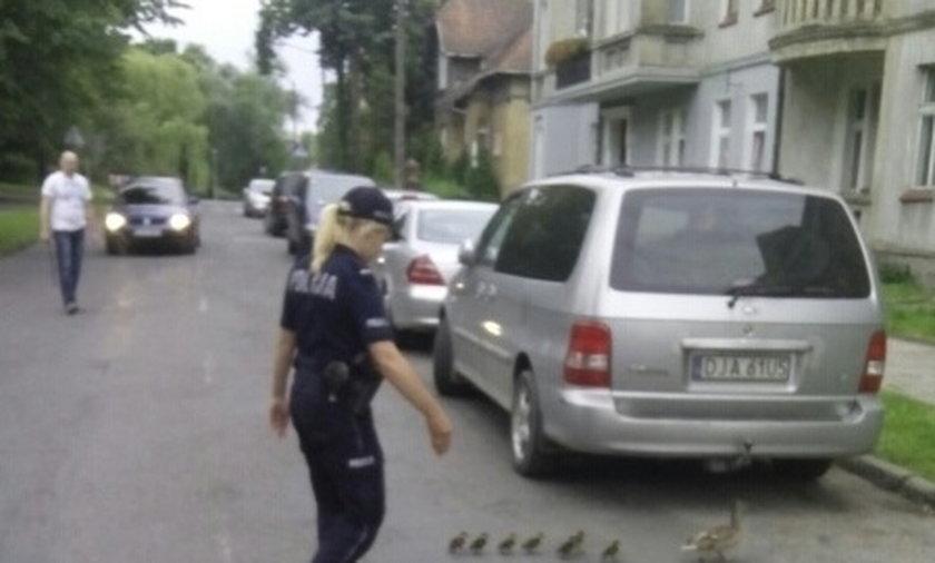 Policjanci przeprowadzają kaczą rodzinę