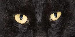 Miałeś pecha? Dziś dzień czarnego kota