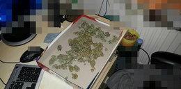 Uprawiał marihuanę w szafie