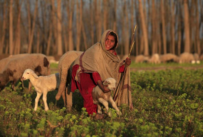 A girl reacts while holding a sheep at a field in Nowshera, Pakistan