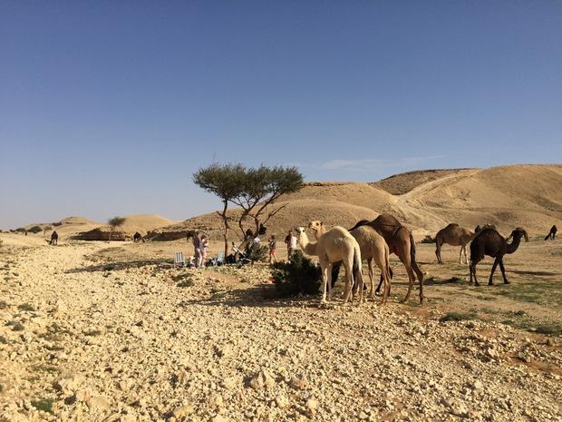 Wypad na pustynię, miejsce zwane Fossils