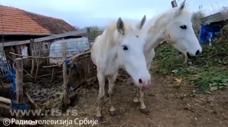 Konji, Jagodina