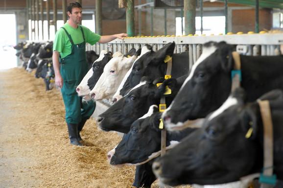 Farma krava može da proizvede 500 kW električne struje
