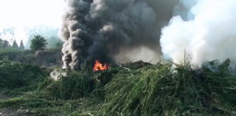 Spalili prawie 9 tys. roślin. FILM