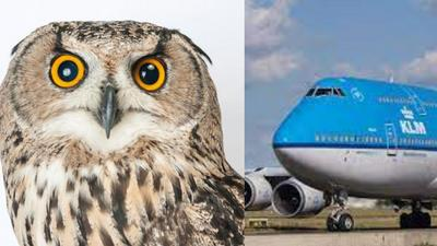 KLM cancels flight as bird hijacks plane at Kotoka International Airport, prevents it from flying