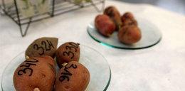 Polacy wynaleźli pustynne ziemniaki!