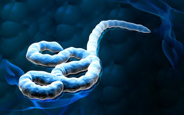 W lutym 1988 r. kierujący w Wektorze zespołem badającym wirus marburski Nikołaj Ustinow złamał tylko jedną procedurę. Podczas wstrzykiwania mikroba świnkom morskim założył – zamiast grubych rękawic z kilku warstw tworzywa sztucznego – tylko dwie pary cienkich gumowych rękawiczek. Podczas wbijania igły asystujący mu technik przypadkiem potrącił rękę naukowca. Ten ukłuł się w kciuk. Pomimo podania wszelkich środków mogących powstrzymać rozwój gorączki krwotocznej chory konał 15 dni w izolatce.