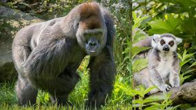 Opolski Ogród Zoologiczny - rozrywka i nauka dla dzieci i dorosłych