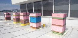 Pszczoły na dachu AGH