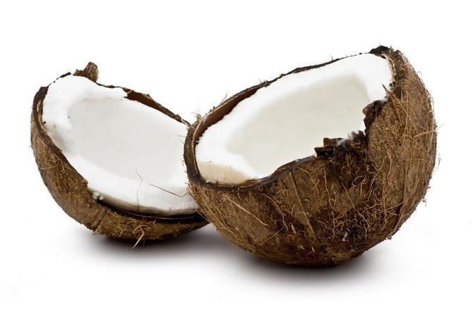 29040_kosa-kokos-foto02-Public-Shutterstock