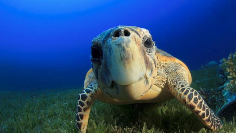 Polacy odkryli skamieniałości najstarszych na świecie żółwi