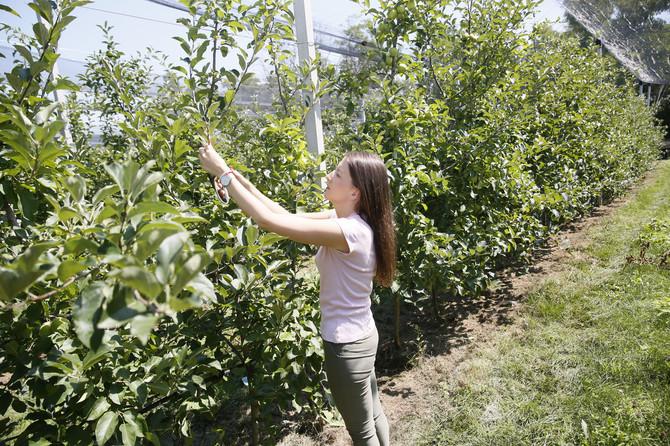 Svako želi vrhunski kvalitet, pa sa A klasom jabuka nema zime